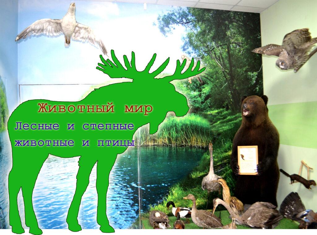 Карасук музей фото животные